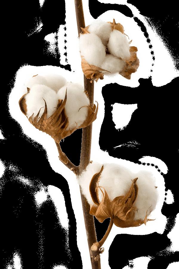 Full Cotton